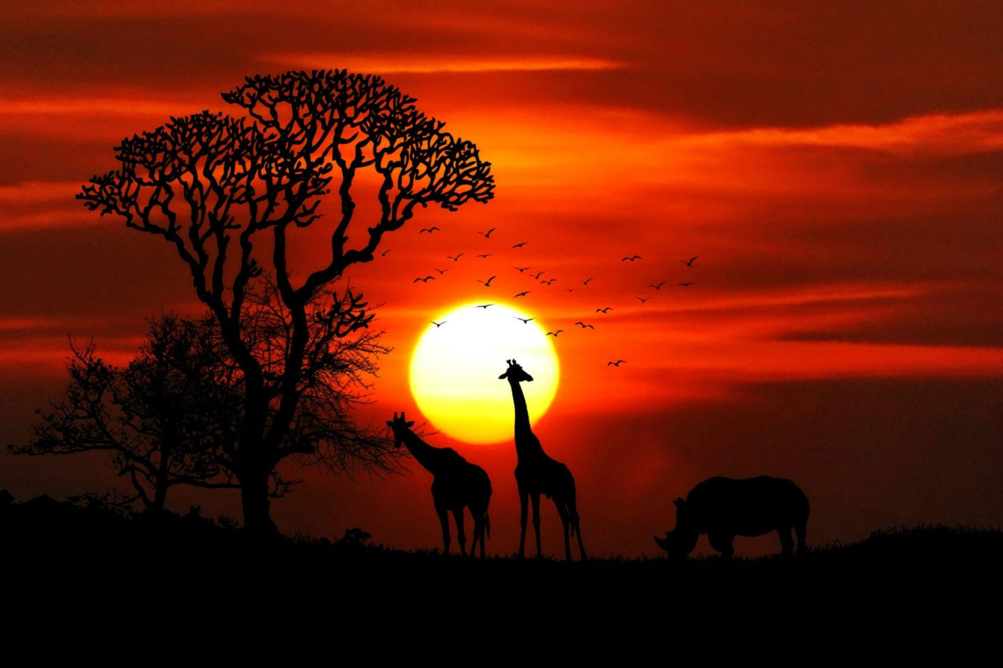 Travelling Africa?!