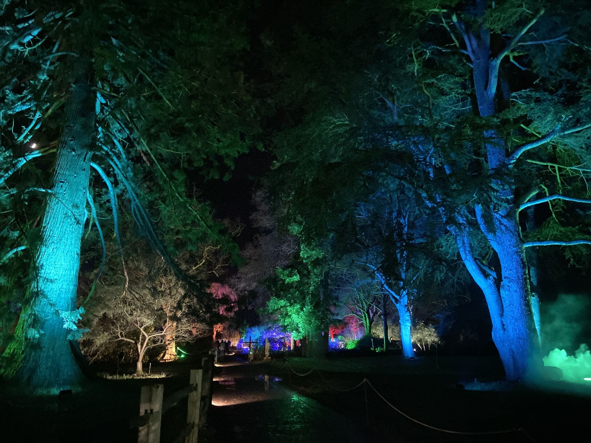 Trees lit up in Colours