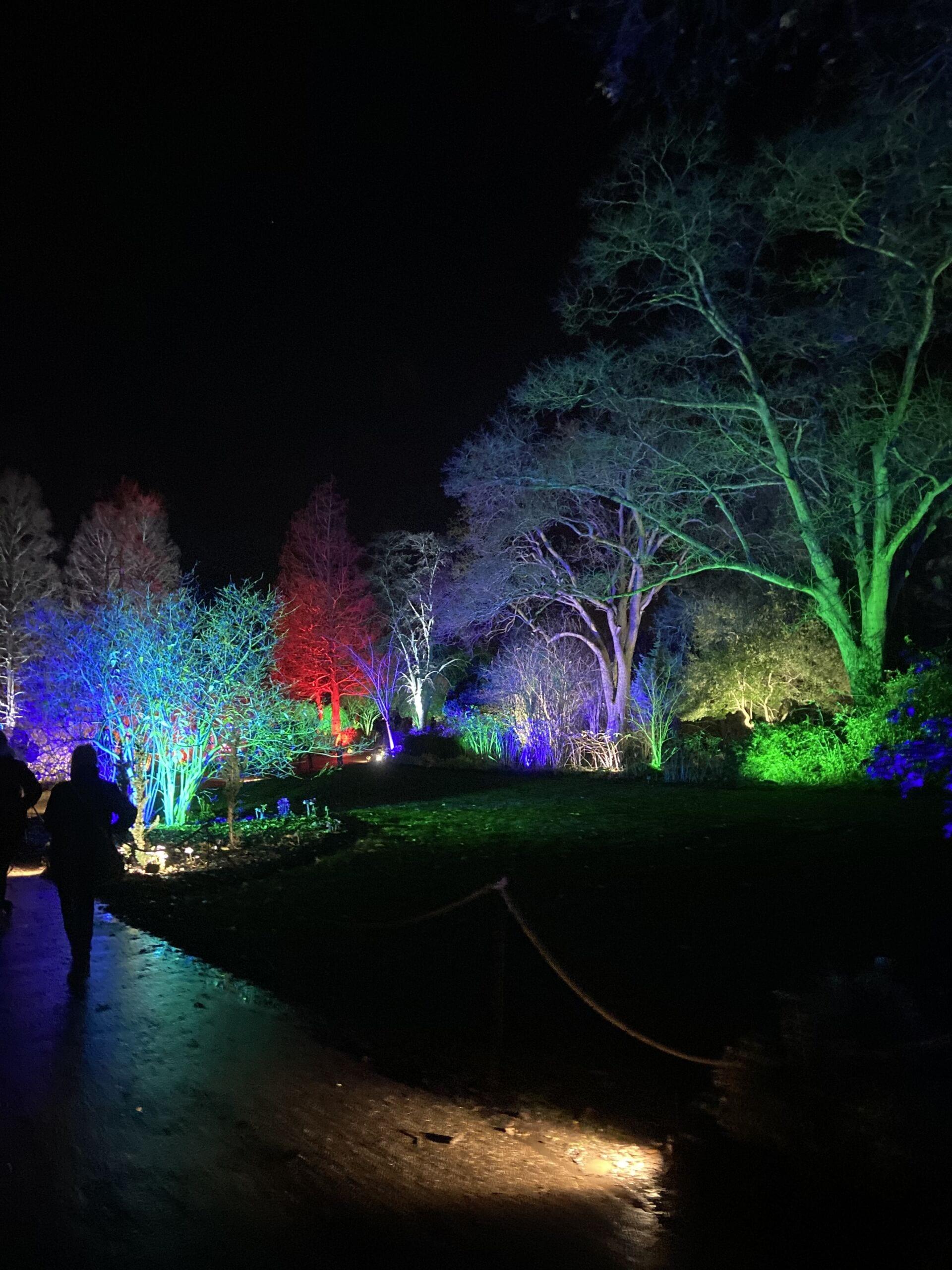 multi coloured trees RHS Wisley Glow